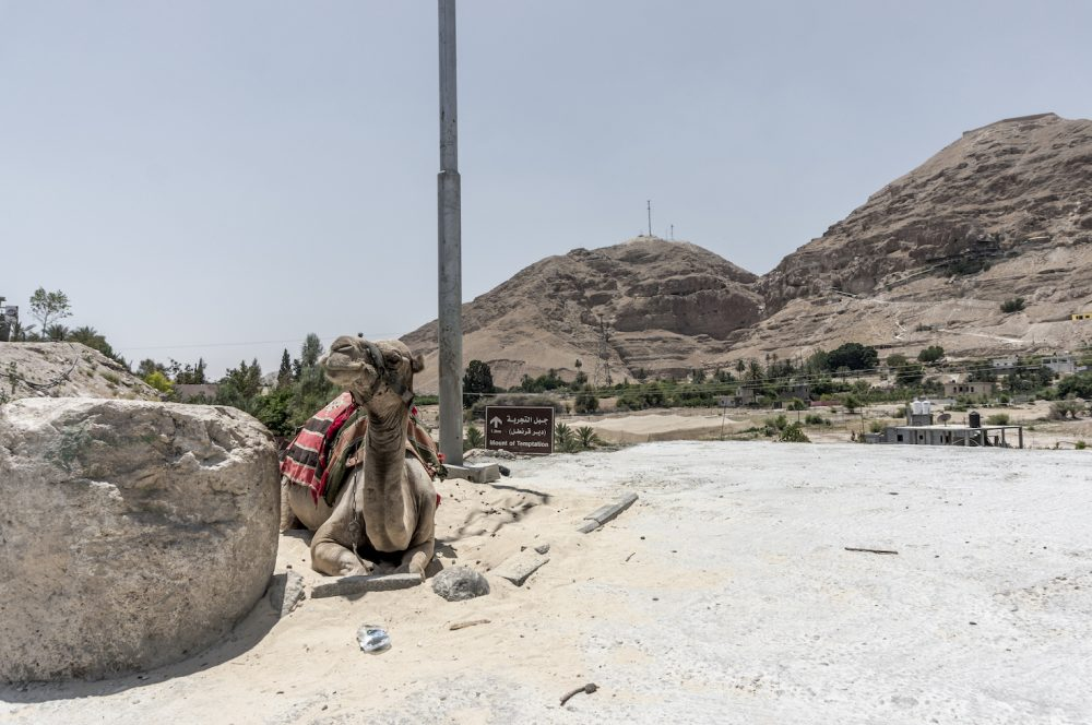 Camel at Mount of Temptation Jericho