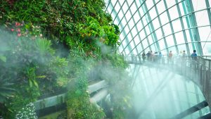 Cloud Forest Misting Time